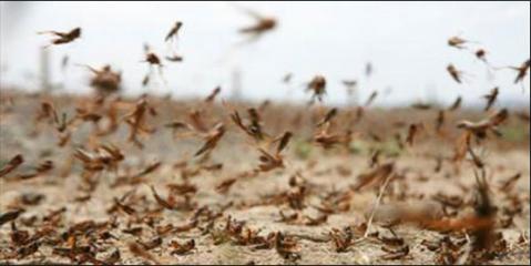 Locust Alert