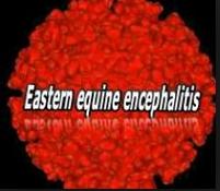 EEE Virus Alert