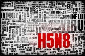 H5N8 Virus Alert