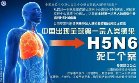 H5N6 Alert