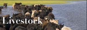 Livestock Alert