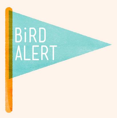 Bird Alert