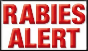 Rabies Alert