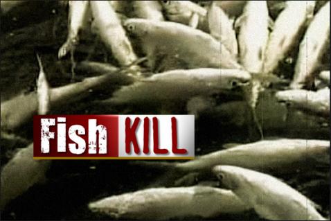 Fish Kill Alert
