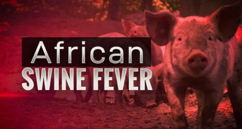 African Swine Fever Alert