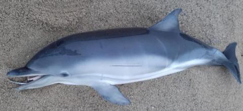 Dolphin Alert