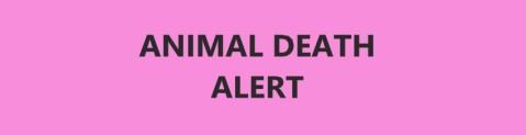 Animal Death Alert