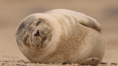 Seal Alert