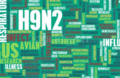 H9N2 Virus