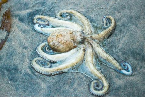 Octopus Alert
