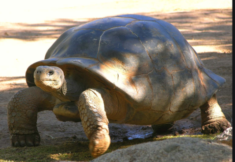 Turtle Alert